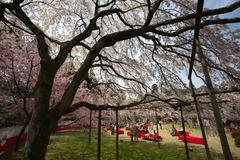 醍醐寺のお茶席