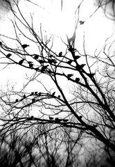 真昼の鳥たち