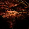 紅葉の並木