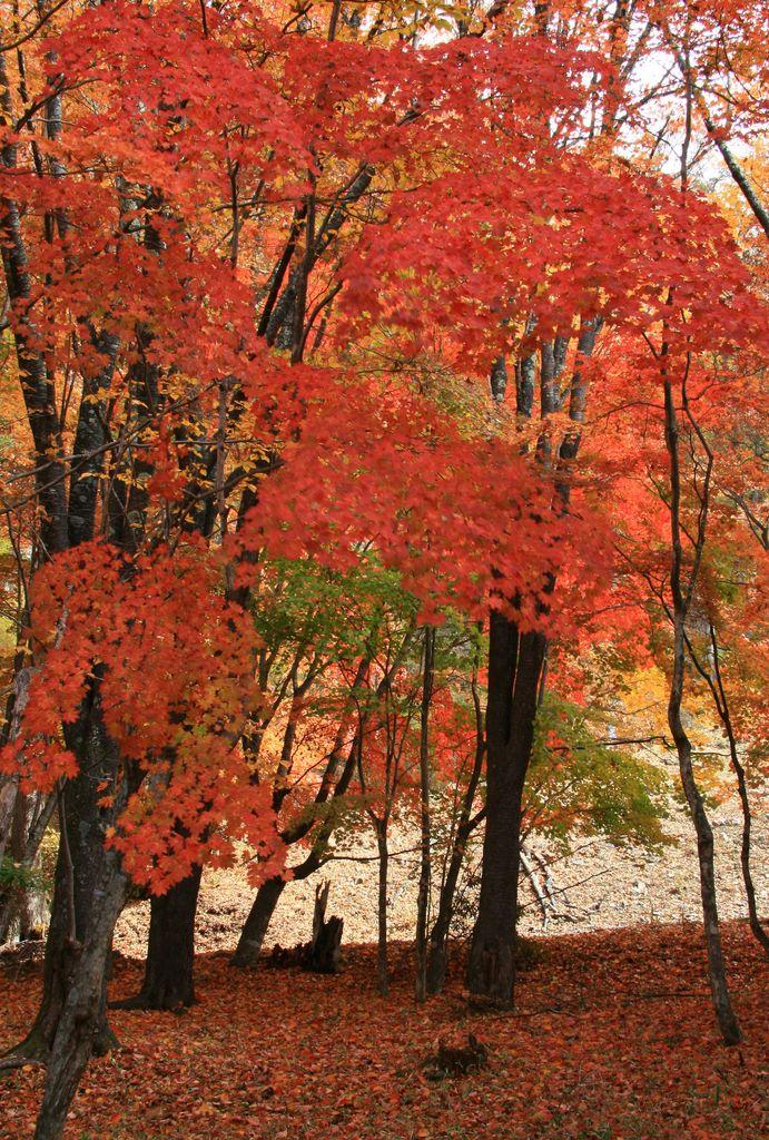中禅寺湖金谷ホテルの紅葉