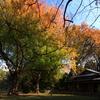 染まりゆく大樹
