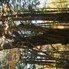 巨木~ネジりん棒