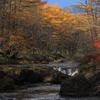 秋模様 竜頭の滝上流
