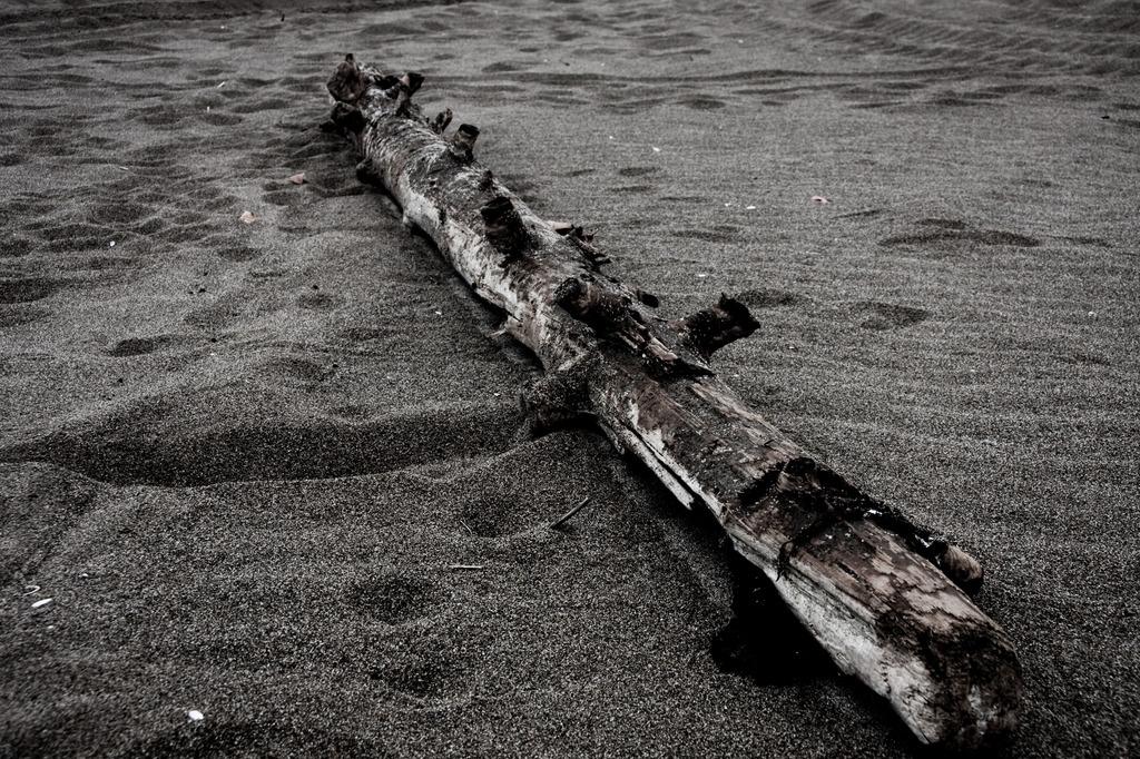 海辺の旅人