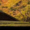 京都南禅院紅葉