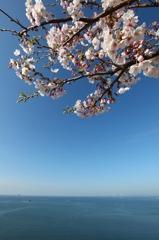 瀬戸内海と桜