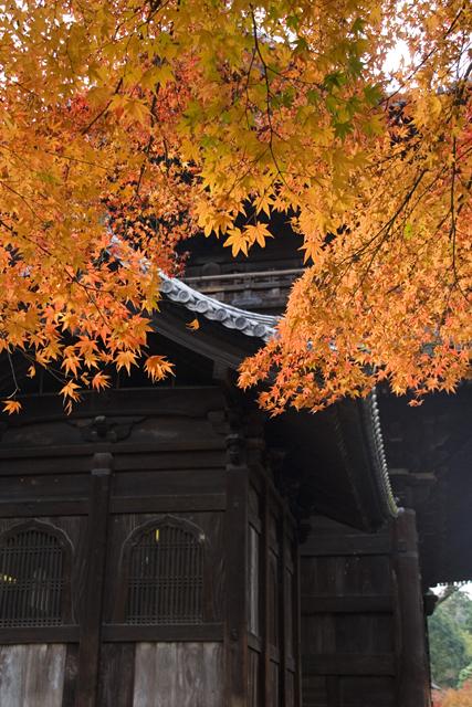 京都南禅寺三門と紅葉