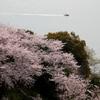 桜と瀬戸内海と時々船