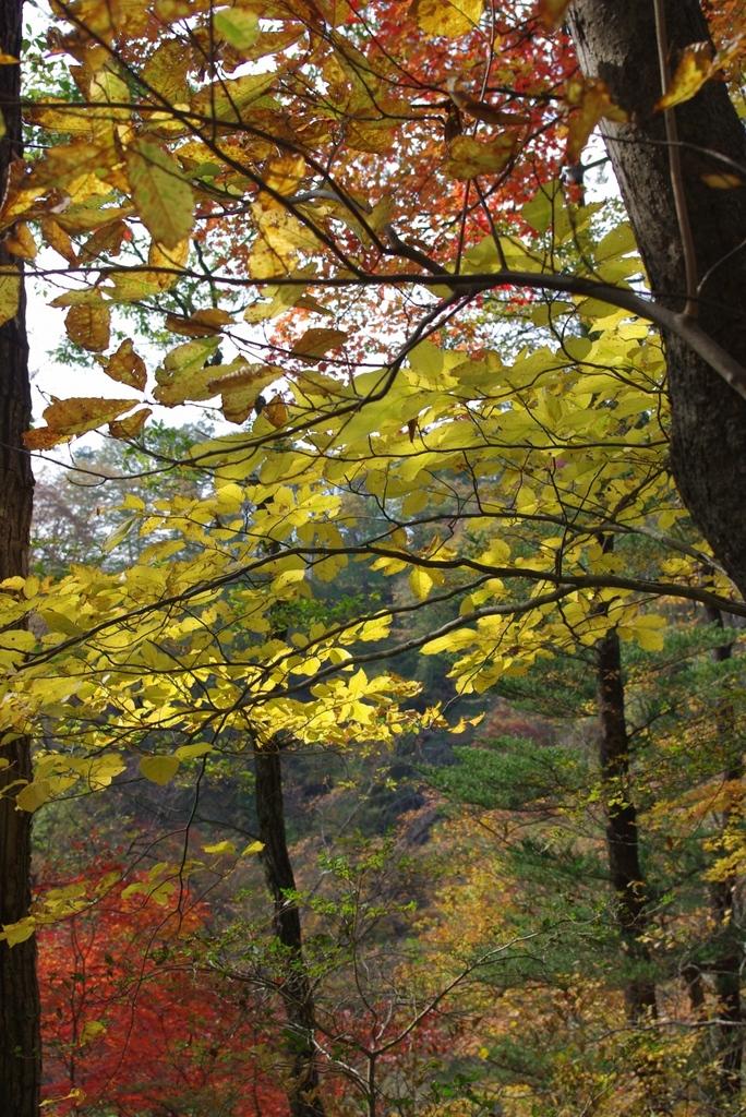 日光霜降りの滝への道2‐0910