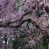 高尾山薬王院‐0904