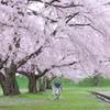 春風と白い自転車