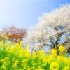 春の想い出