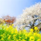 NIKON NIKON D60で撮影した風景(春の想い出)の写真(画像)