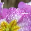 雨上がりの花たち 2