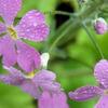 雨上がりの花たち 5