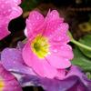 雨上がりの花たち 6