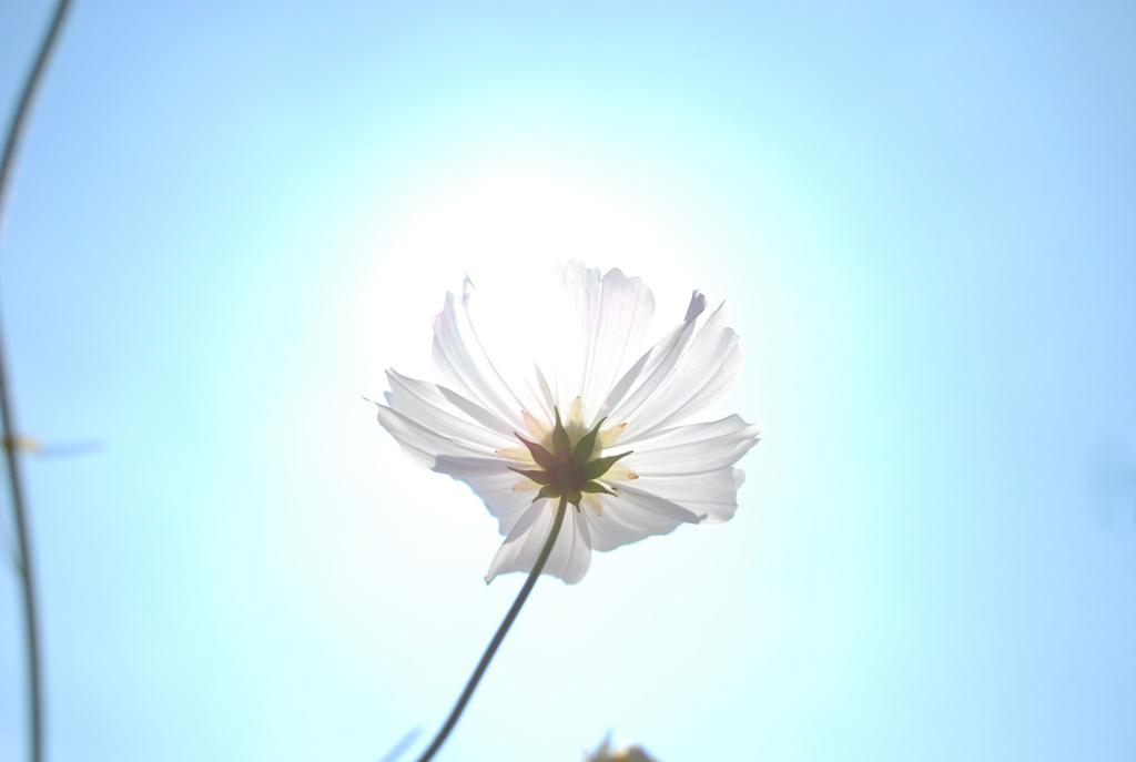 太陽を掴む