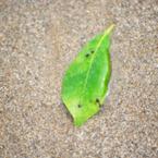 波に乗って辿り着いた葉