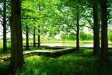 木陰のデッキ