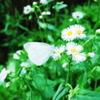 花のベンチ