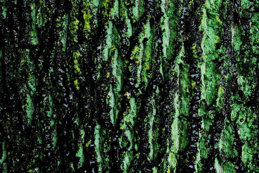 老木の皮膚