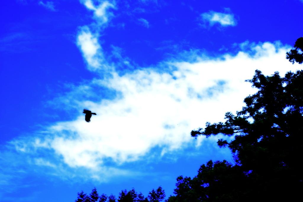 この大空に翼をひろげ
