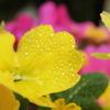 雨上がりの花たち 3