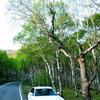 白樺と愛車