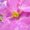 雨上がりの花たち 1