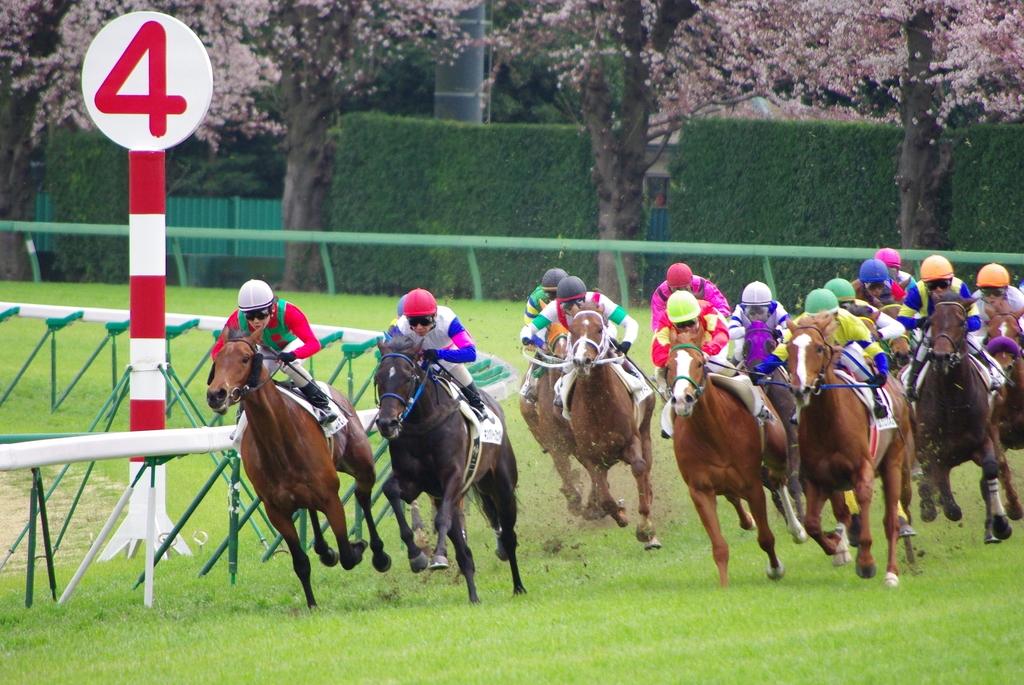 春の中山競馬場