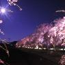 京都 夜久野高原 夜桜