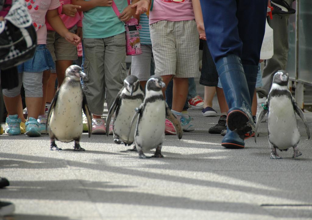 但馬國 但馬海岸 ペンギンさんの散歩