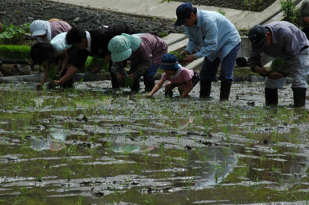 村の田植え
