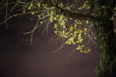 photo367194