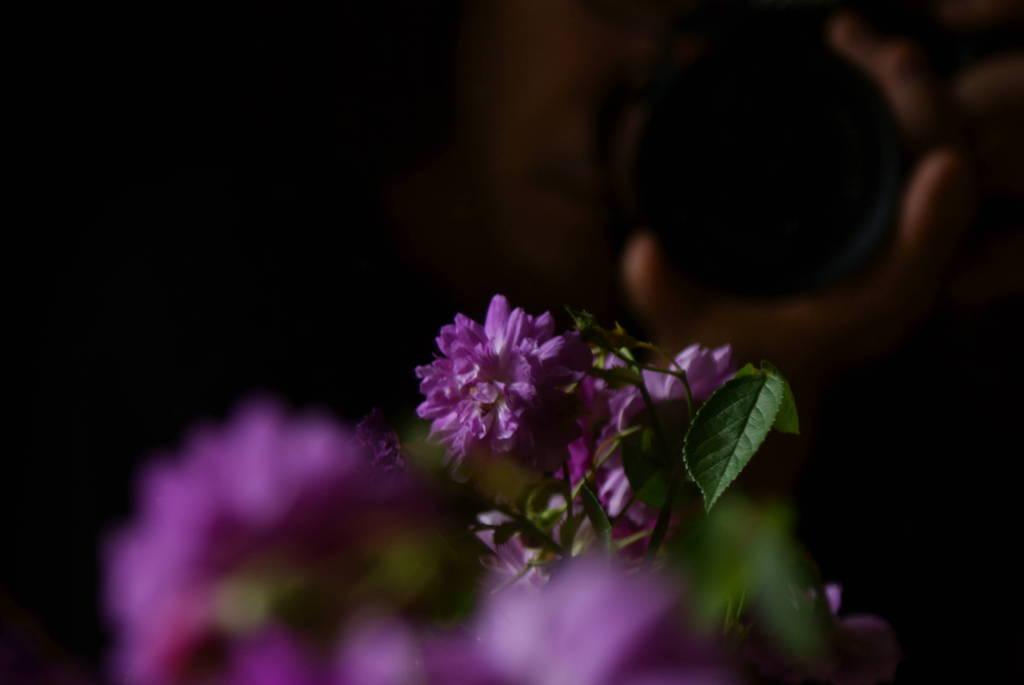 花と、私と。