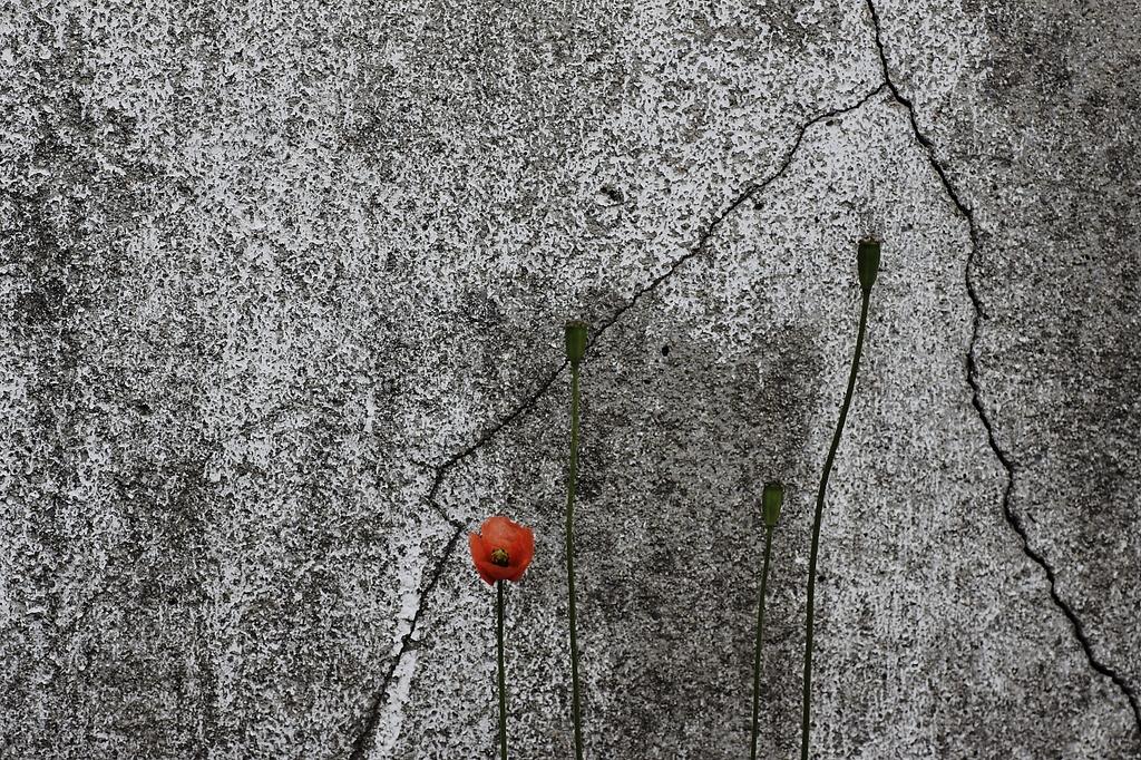 flower life