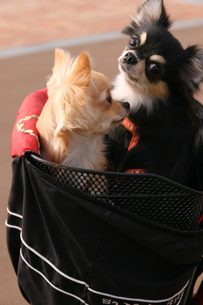 Dog in the bag 2