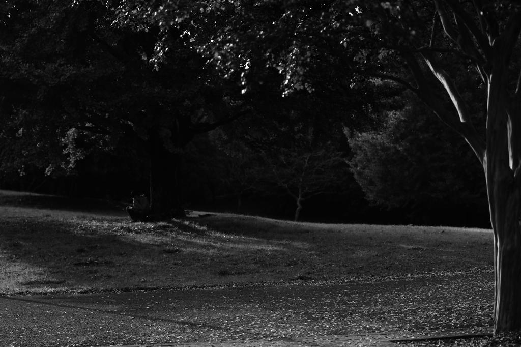 木陰で読書する若い人