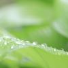 雨滴 水滴