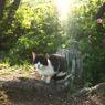 OLYMPUS E-410で撮影した動物(ブサイクな猫)の写真(画像)