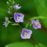 PENTAX PENTAX K10Dで撮影した植物(IMGP2143)の写真(画像)