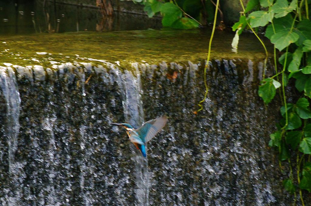 水路の翡翠