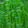 PENTAX PENTAX K10Dで撮影した植物(IMGP1435b)の写真(画像)