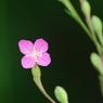 PENTAX PENTAX K20Dで撮影した植物(IMGP3550)の写真(画像)