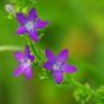 PENTAX PENTAX K10Dで撮影した植物(IMGP4365b)の写真(画像)