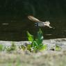 PENTAX PENTAX K20Dで撮影した動物(IMGP0490a)の写真(画像)