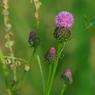 PENTAX PENTAX K20Dで撮影した植物(IMGP1940)の写真(画像)