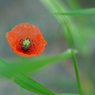 PENTAX PENTAX K10Dで撮影した植物(IMGP3567a)の写真(画像)