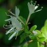 PENTAX PENTAX K10Dで撮影した植物(IMGP4217)の写真(画像)
