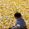 黄金色の絨毯